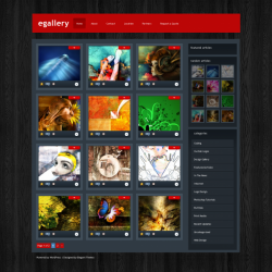 eGallery WordPress Theme - Gallery|Photography|Tumblr-Style
